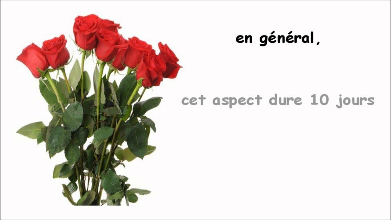 Comment Conserver Une Rose