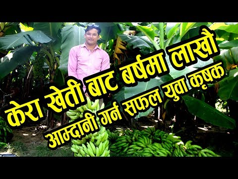 Kera kheti केरा खेती Om mangalam agri farma mangal kumar bista ||By Ujyalo media pvt ltd.