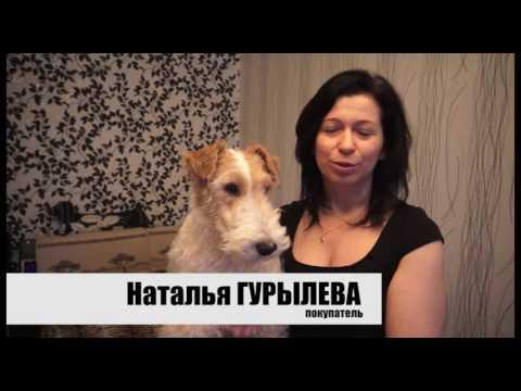 Обои в Пушкино