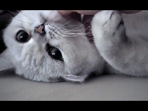Velký kočička tumblr