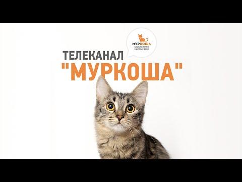 """Телеканал """"Муркоша"""""""