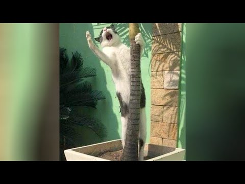 Animal ATTENTION SEEKERS - Funny and cute!