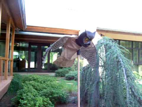The Prowler Owl Decoy Keeps Birds And Other Critters Off Of Our Deck:)