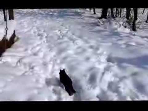 Un gatto sulla neve! Che risate…