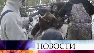 Проверку видео о незаконной охоте на медведя взял под личный контроль глава регионального МВД.
