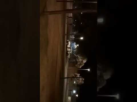 White Extremists chasing Aboriginal children in Port Augusta 14/10/2017