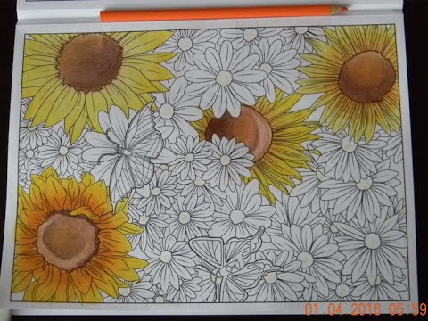 Coloring Sunflowers W Colored Pencils Time Lapse