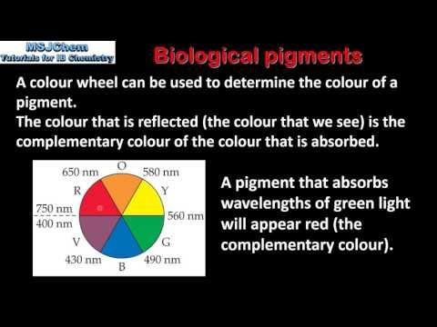 B.9 Biological pigments (HL)
