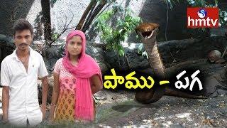 స్పెషల్ ఫోకస్ | పాములు పగపడుతాయి | Snake's Revenge | hmtv