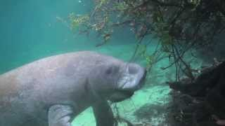 Fort Pierce Manatee Educational Video