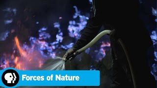 FORCES OF NATURE | Episode 2 Scene: A Volcanos Blue Flames | PBS