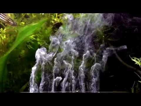 Saratogas-Aquaworld Produkttest: Aquarium-Fresher in Slo-Mo