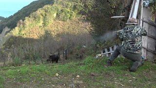 A Perfect Wild Boar Hunt(English Subtitle) / Mükemmel Bir Domuz Avı ( Duracağın Yeri Bil-3)