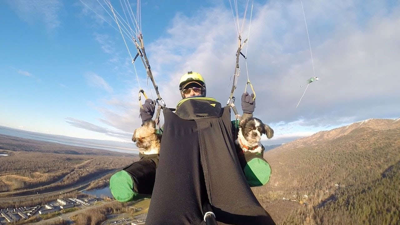 Man Takes Dogs Paragliding
