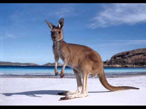 The Kinks Australia (Australian Single Version) 1969