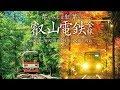 青もみじと紅葉の叡山電鉄 全線 サンプルムービー