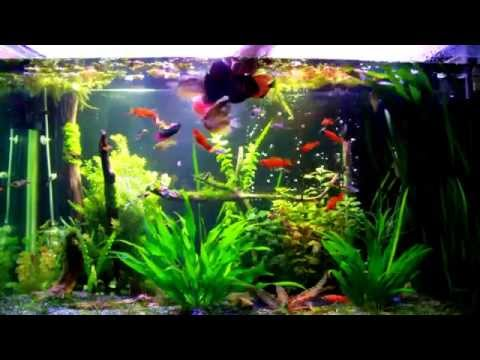 Feeding My 100 Gallon Tropical Planted Freshwater Fish Tank