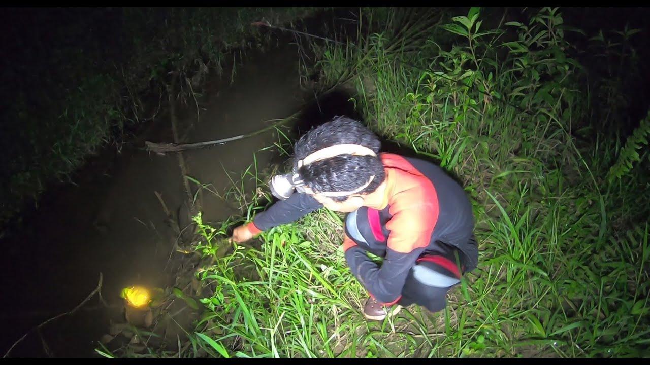 Ikan Lembat Pada Keluar Nyium Bau Umpan Saya