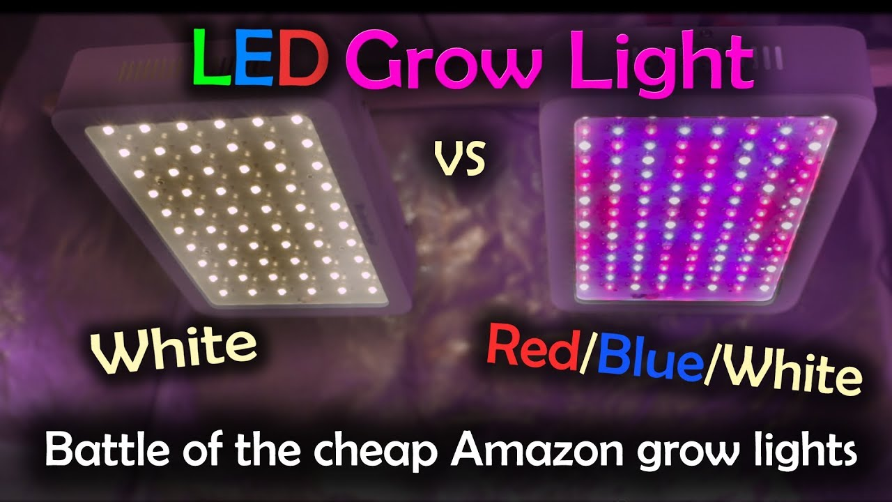 Led White White Led Vs Red Blue White Led Grow Test Amazon Lights Intro