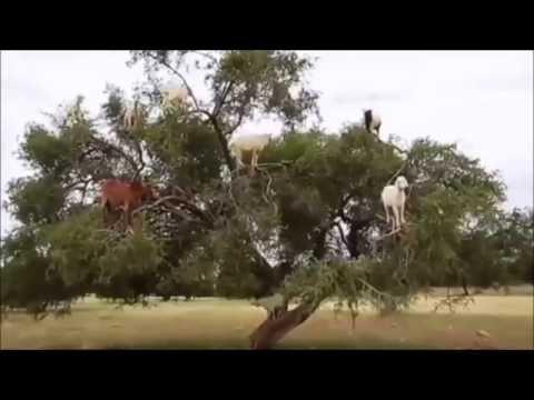 кто ответ игре деревьям по к лазает матрешка