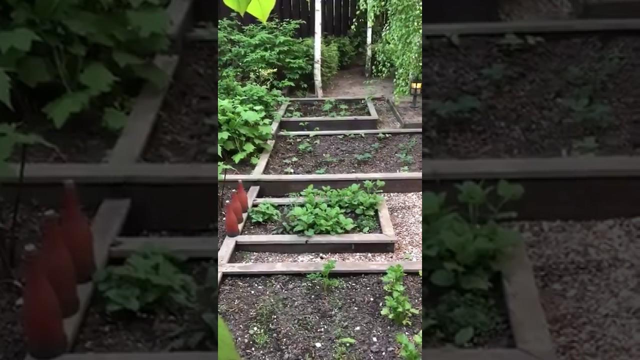 Декоративный огород в саду своими руками