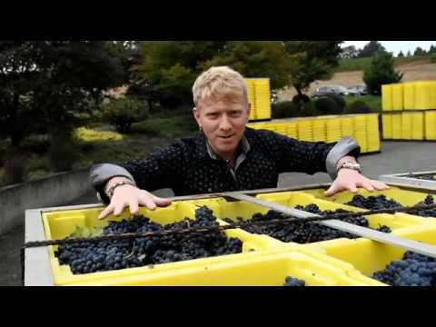 Oregon Wine Vintage Review 2013, 2014, 2015 Harvest 2017