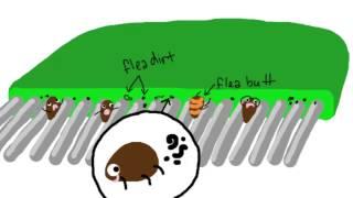 3 Steps to Getting Rid of Fleas