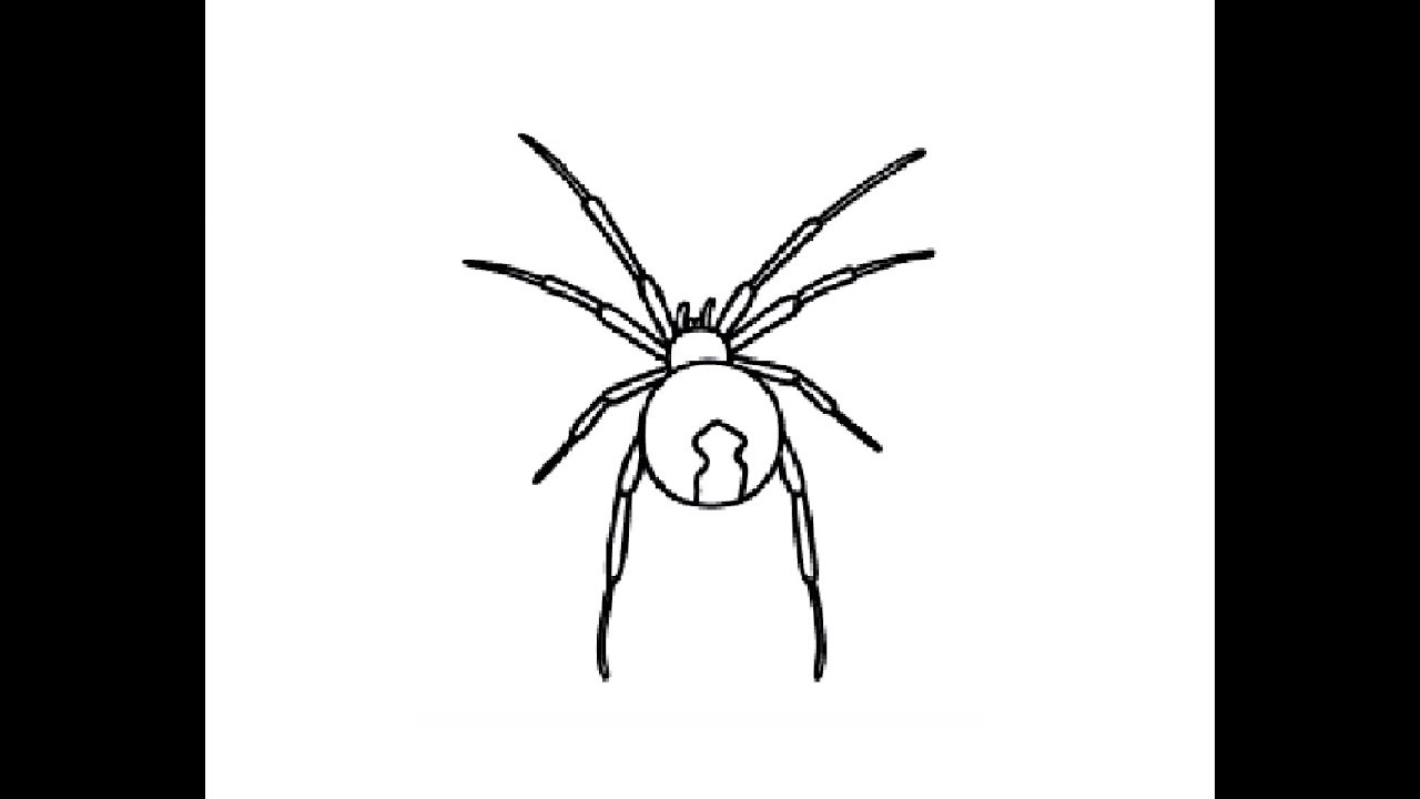 How To Draw Easy Black Widow Spider Pencil Drawing Step By Step