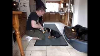 Lady Lara Diaries Week 3 (10 Week Old Puppy Being Trained, Rottweiler)