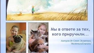 Бездомные животные в г. Обнинске