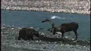 Der Bär und der Hirsch  (Медведь и Олень)