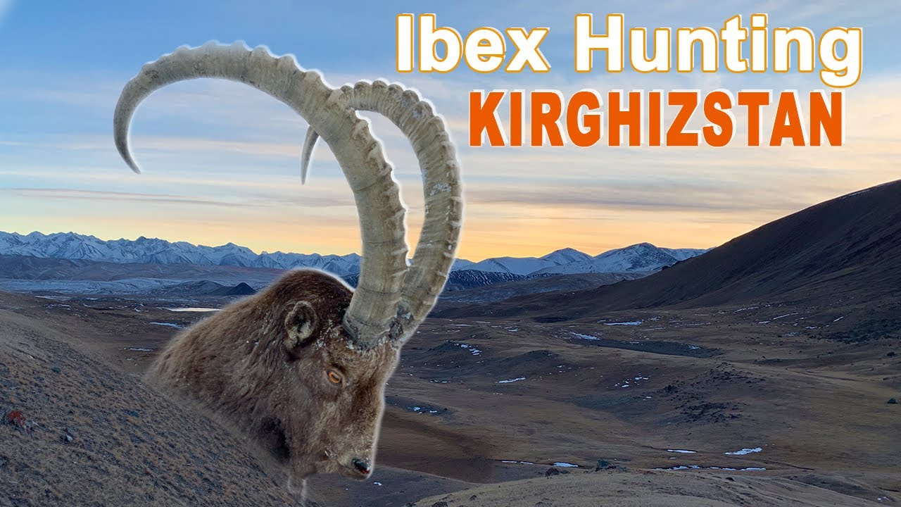 ibex hunting chasse in kirghizstan naryn by ovini exp ditions youtube. Black Bedroom Furniture Sets. Home Design Ideas