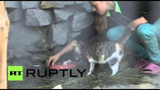 قطة منزلية تتبنى صغير وشق بعد أن رفضته أمه