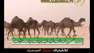 منقية الامير فيصل بن سعود بن محمد ال سعود