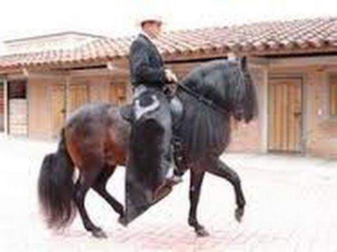 tourist-riding-colombian-paso-fino-horses--tvagro-por-juan-gonzalo-angel