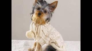 вязаная одежда для собак маленьких пород