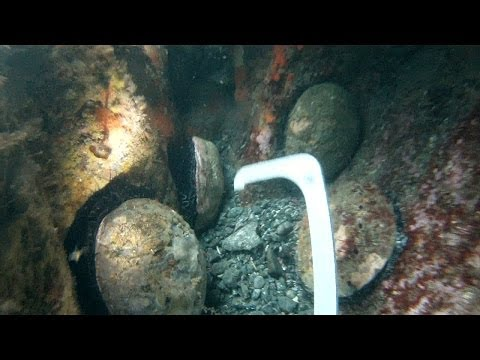 HD Spearfishing and Abalone Diving Mendocino California