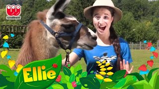 Ellie Explorer | The Llama Song | Animals for Kids Compilation | WildBrain Kids