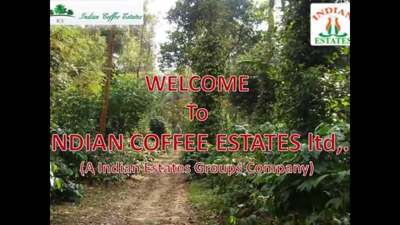 India Estate Coffee
