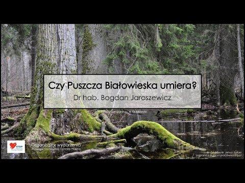 Dr hab. Bogdan Jaroszewicz - Czy Puszcza Białowieska umiera?