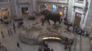 National Museum of Natural History - Student Orientation Video