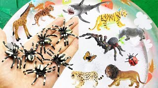Learn Wild Zoo Animal Names | Fish | Birds | Insect | Dinosaur | Toys Video for Kid