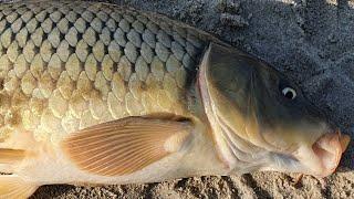 Рыбалка 48 ЧАСОВ С КОМФОРТОМ 40 КГ РЫБЫ ВОТ ЭТО ЖОР