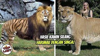 SULIT DIPERCAYA!, Inilah Beberapa Hewan Hybrid Hasil Perkawinan Silang Hewan Beda Spesies!