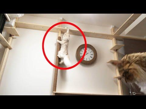 【衝撃映像】マロンがまさかの行動に・・・!?