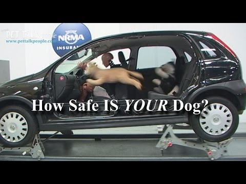 Scary Stuff! – 23 out of 25 Dog Car Harnesses Fail – NRMA 2013 Report!