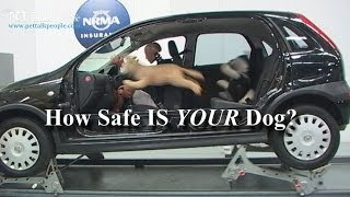 Scary Stuff! - 23 out of 25 Dog Car Harnesses Fail - NRMA 2013 Report!