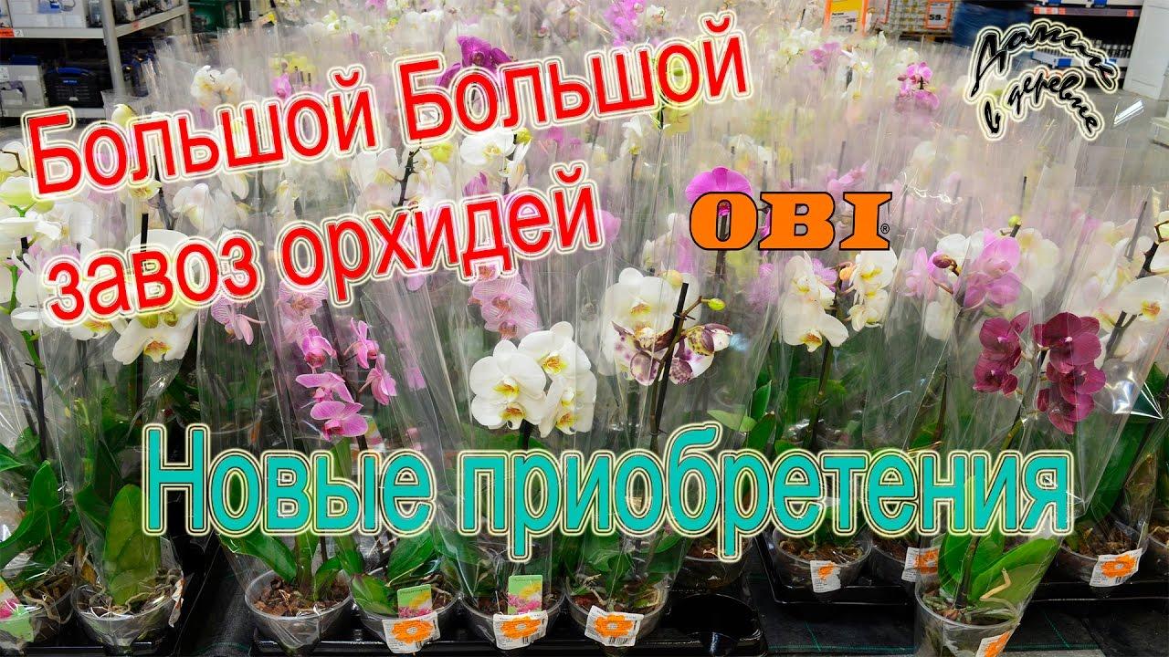 Домик в деревне орхидеи видео новинки