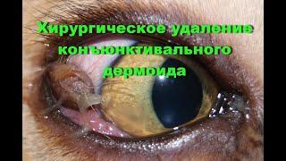 Хирургическое удаление конъюнктивального дермоида у кота