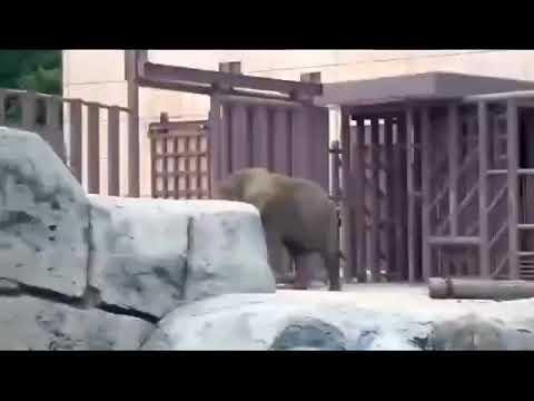 Esta es la reacción de nuestra hermosa Ely el día del sismo de 19S en el Zoo de Aragón.